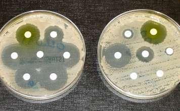 Устойчивость к антибиотикам.
