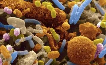 Кишечный микробиом.