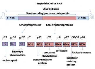 Геном вируса гепатита C.