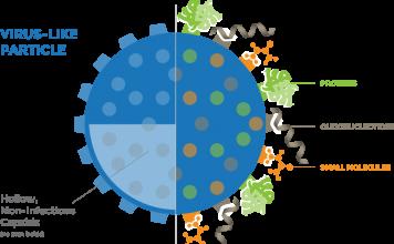 Вирус-подобные частицы.
