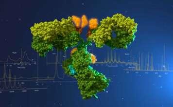 Конъюгат моноклонального антитела.