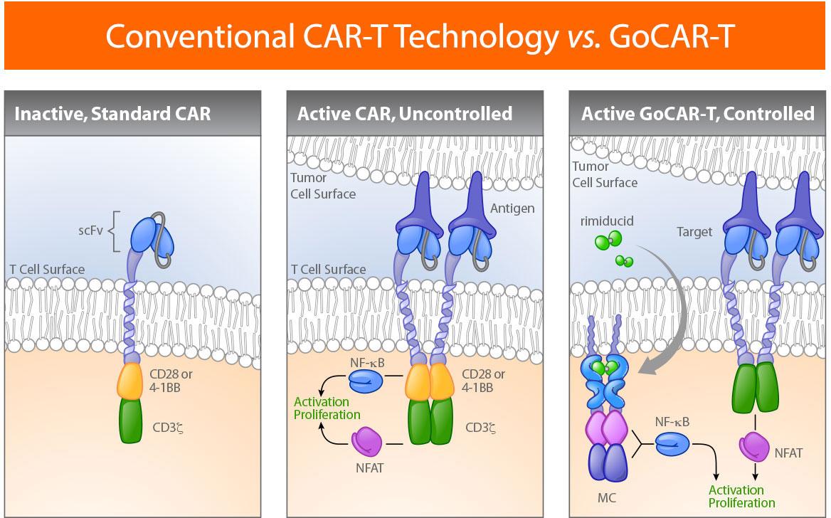 Технология GoCAR-T.