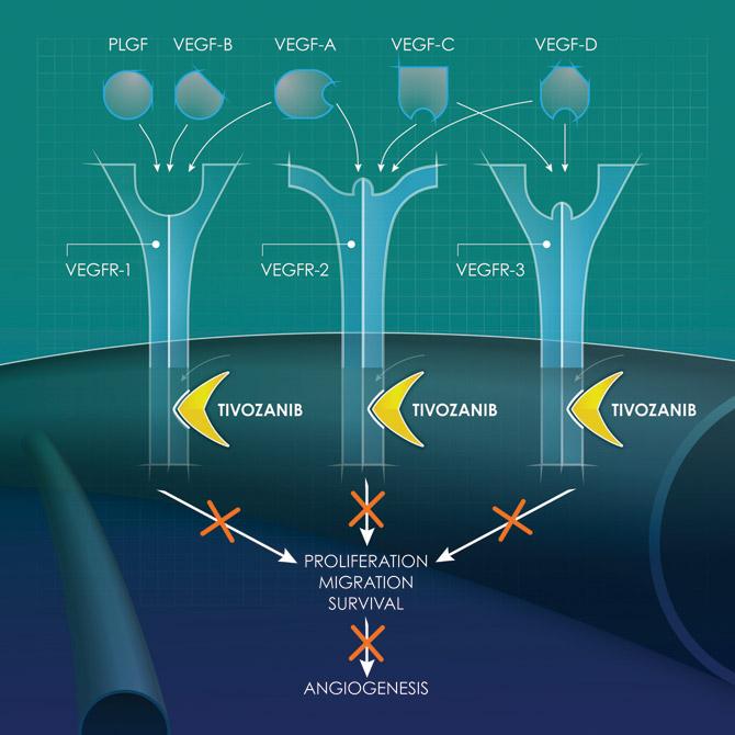 Тивозаниб против ангиогенеза.