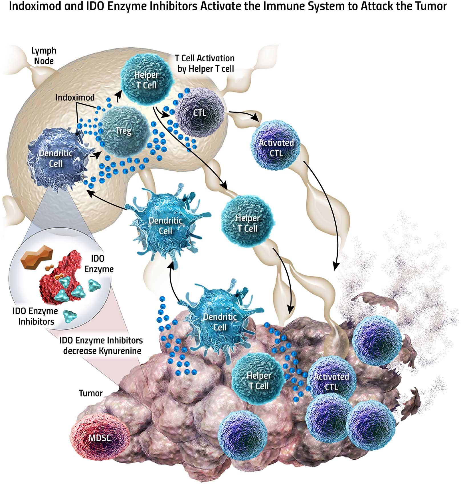 IDO: вторая волна ингибиторов иммунных контрольных точек
