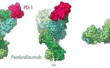 Пембролизумаб (pembrolizumab).