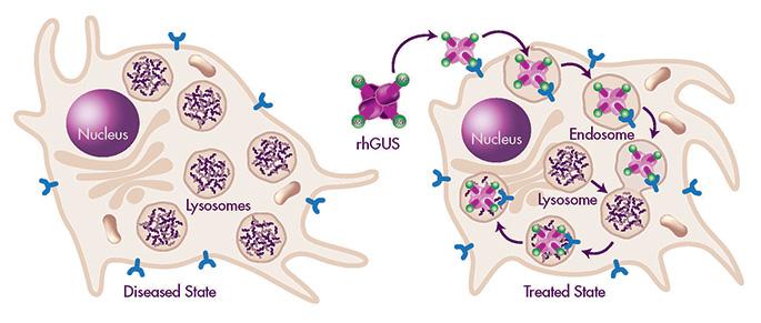 ultragenyx04 - Ultragenyx: что дальше