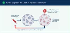 autolus 02 300x144 - Autolus: CAR-терапия следующего поколения против рака