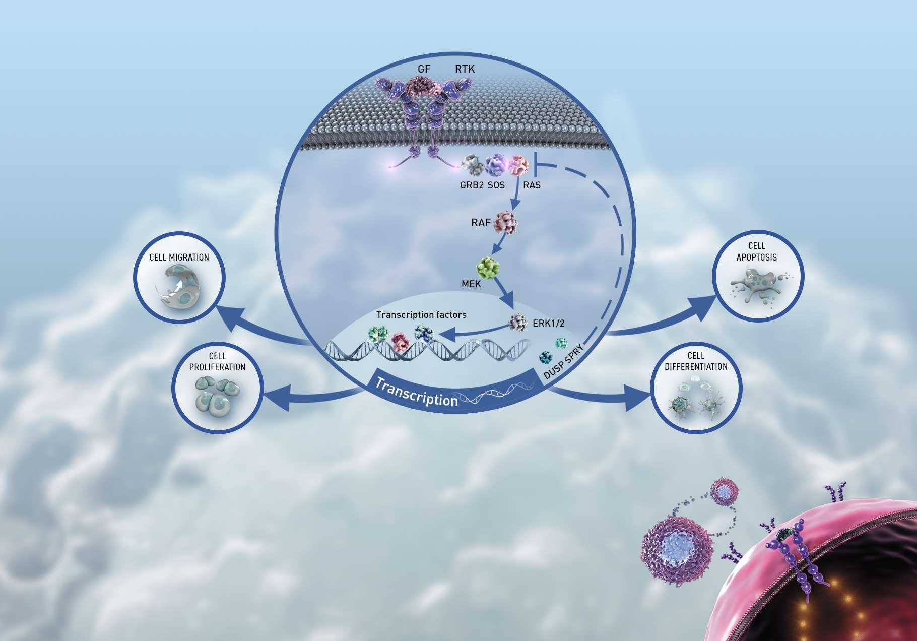 Eli Lilly: главная цель — онкология