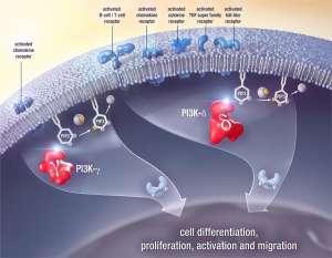 Экспериментальный дувелисиб: успешный PI3K-ингибитор