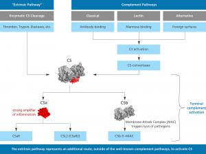 InflaRx против гнойного гидраденита и васкулитов