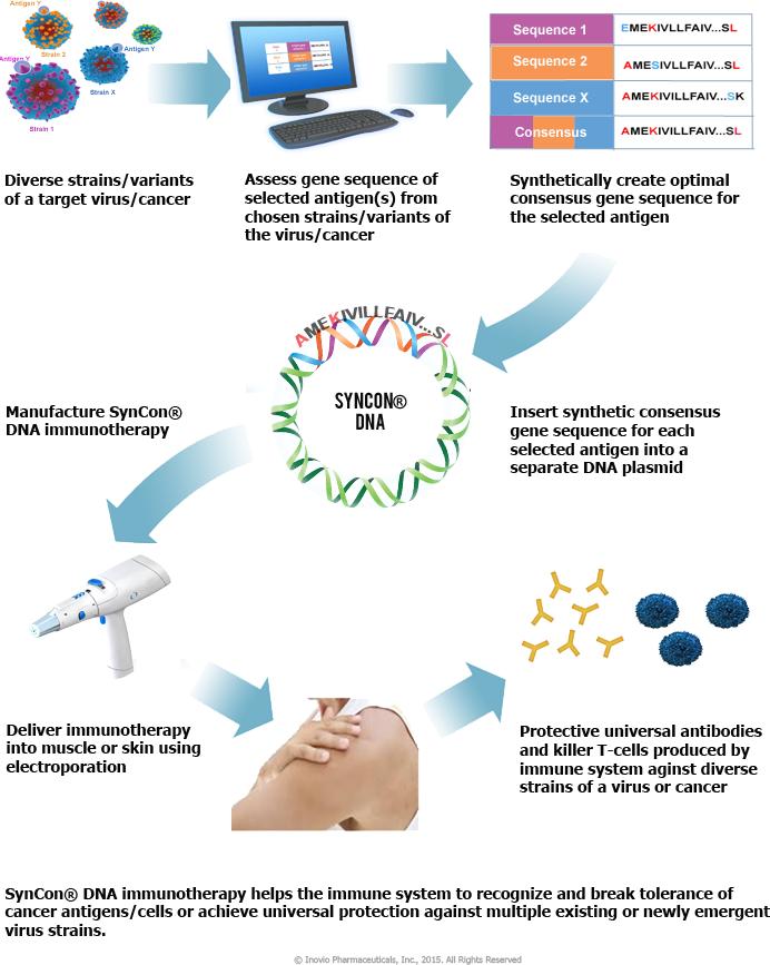 syncon - Вакцина против Зика впервые испытана на людях