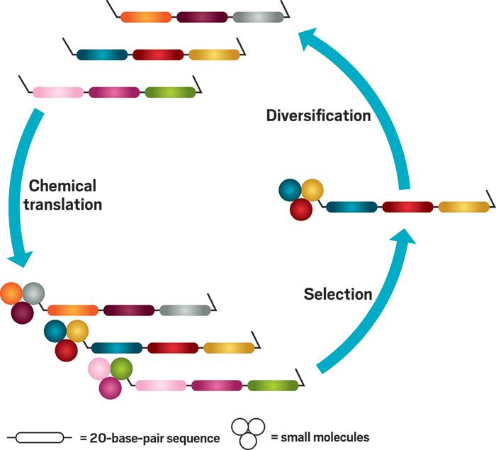 directed chemical evolution 01 - DiCE Molecules придумала, как заменить моноклональные антитела таблетками