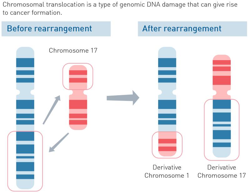 genomic rearrangements Genomic rearrangements in sporadic lymphangioleiomyomatosis: an  genomic profiles  somatic rearrangements and smaller deletions.