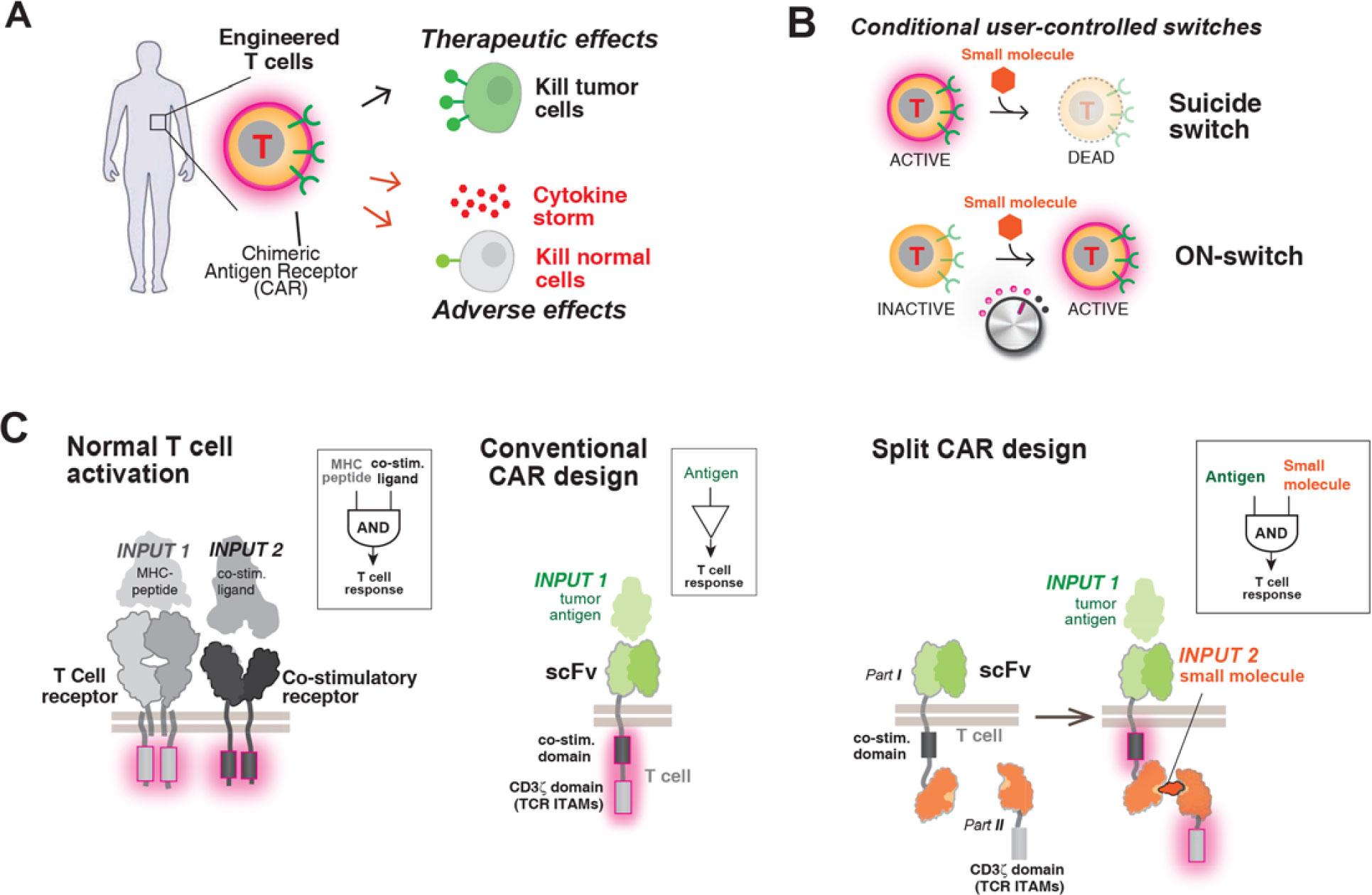 throttle switch - Cell Design Labs и технологии программирования T-клеток