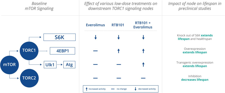 mtorc1 - resTORbio: перспективный сигнальный путь mTOR