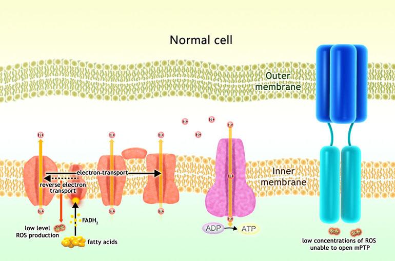 Имеглимин: препарат совершенно нового класса для лечения диабета