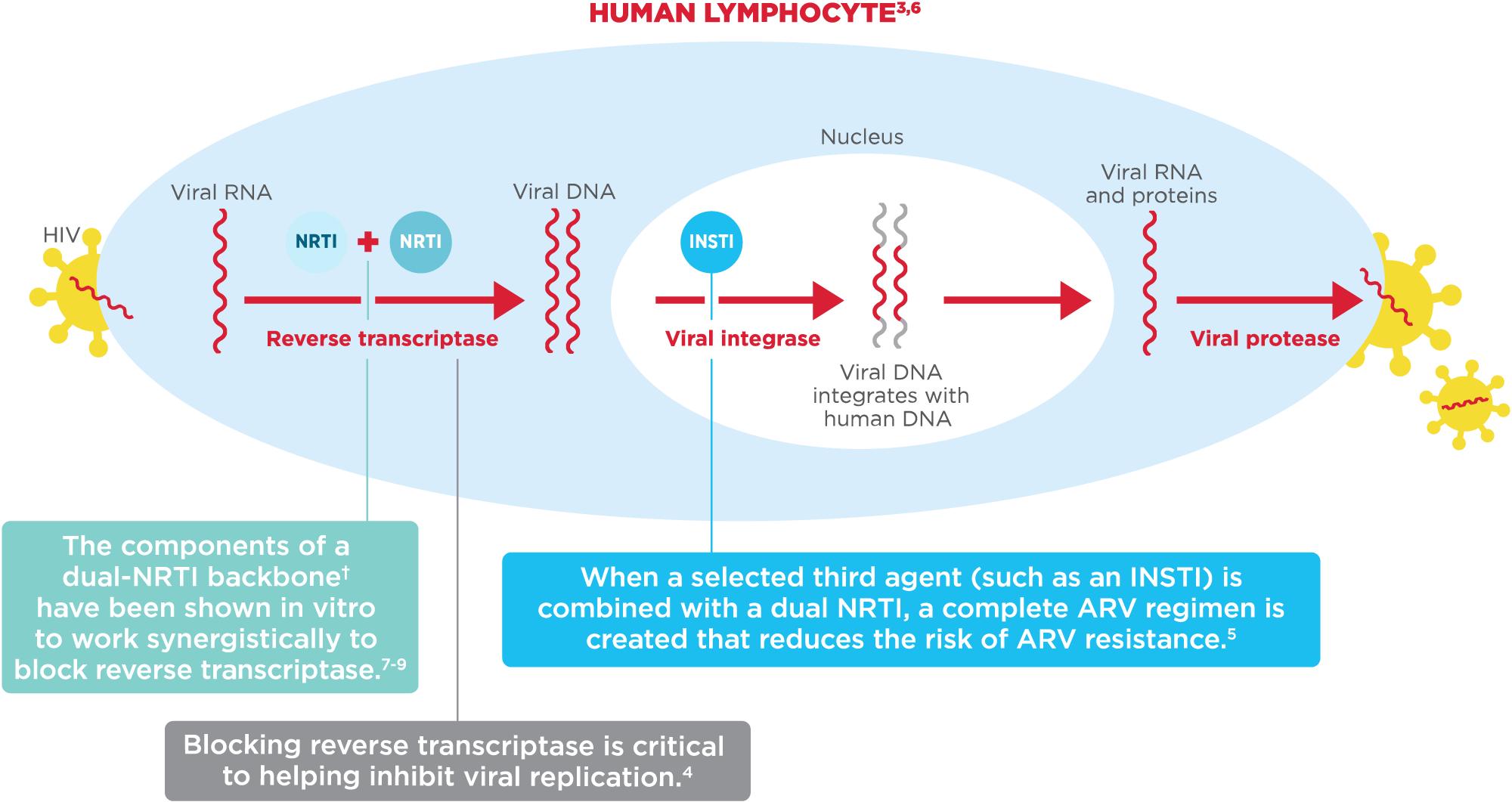 biktarvy moa - «Биктарви»: новое трехкомпонентное лечение ВИЧ в одной таблетке