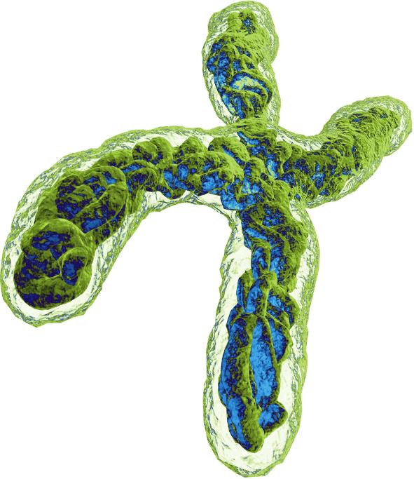 avxs 101 02 - «Золгенсма»: генная терапия, которая вылечит спинальную мышечную атрофию. Все подробности