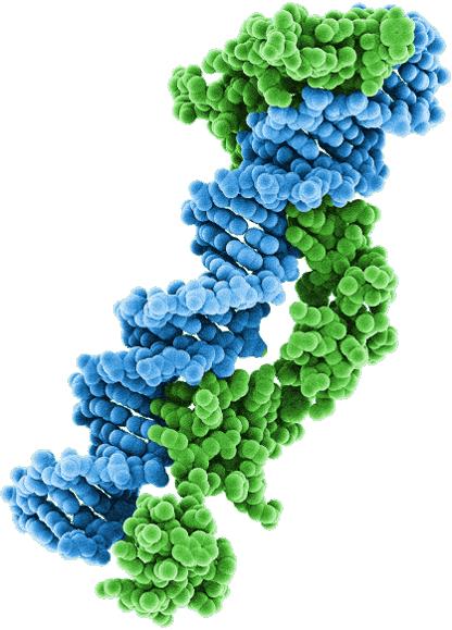 avxs 101 04 - «Золгенсма»: генная терапия, которая вылечит спинальную мышечную атрофию. Все подробности