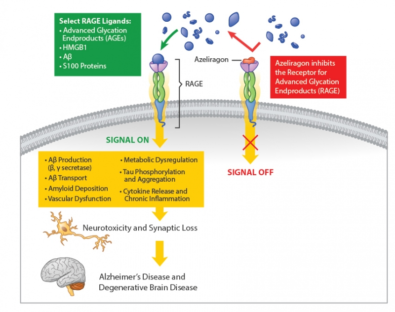azeliragon moa - Азелирагон против болезни Альцгеймера: восставший из пепла