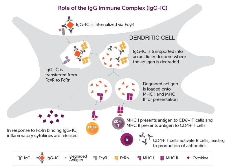 igc immune complex - Alexion подключила аутоиммунную гемолитическую анемию тепловых агглютининов