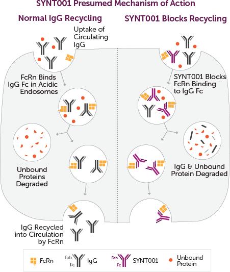synt001 moa - Alexion подключила аутоиммунную гемолитическую анемию тепловых агглютининов