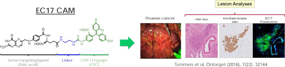 endocyte car t 02 - Novartis ударилась в радиофармацию