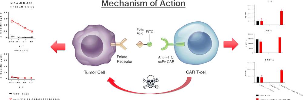 endocyte car t 03 - Novartis ударилась в радиофармацию