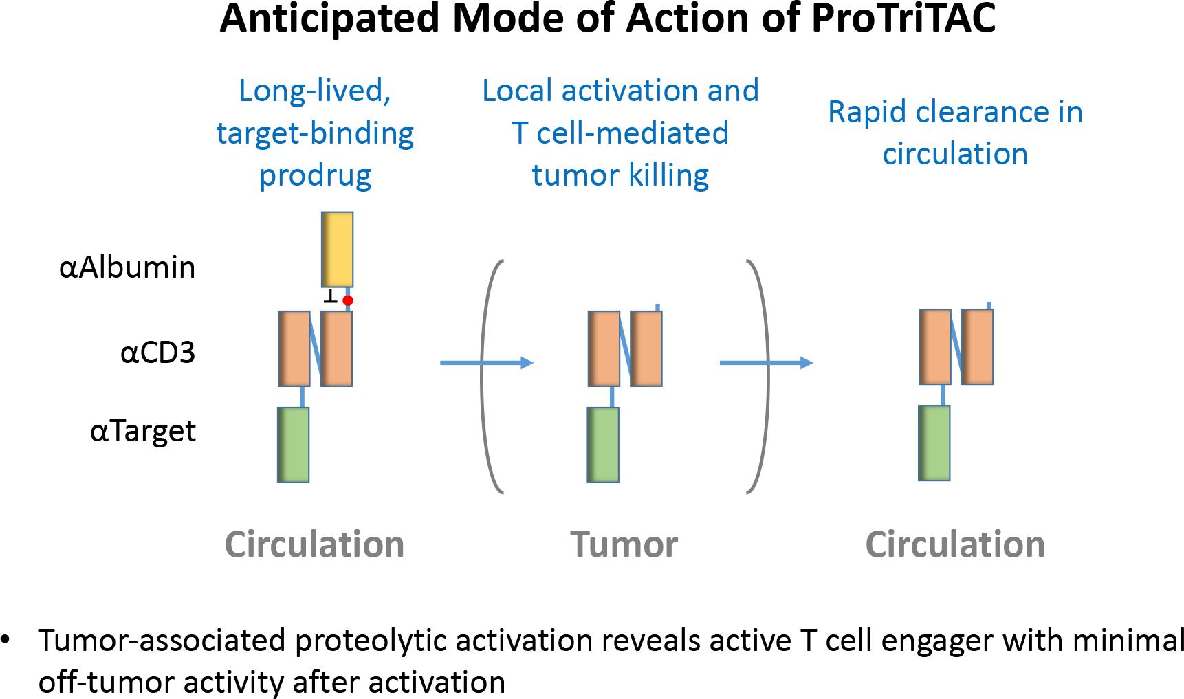 protritac 02 - Harpoon Therapeutics: новая модальность иммуноонкологического лечения