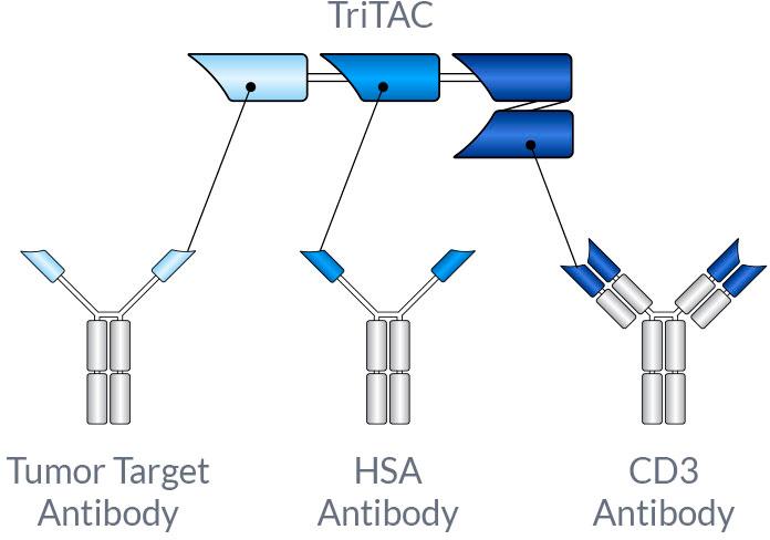 tritac 01 - Harpoon Therapeutics: новая модальность иммуноонкологического лечения