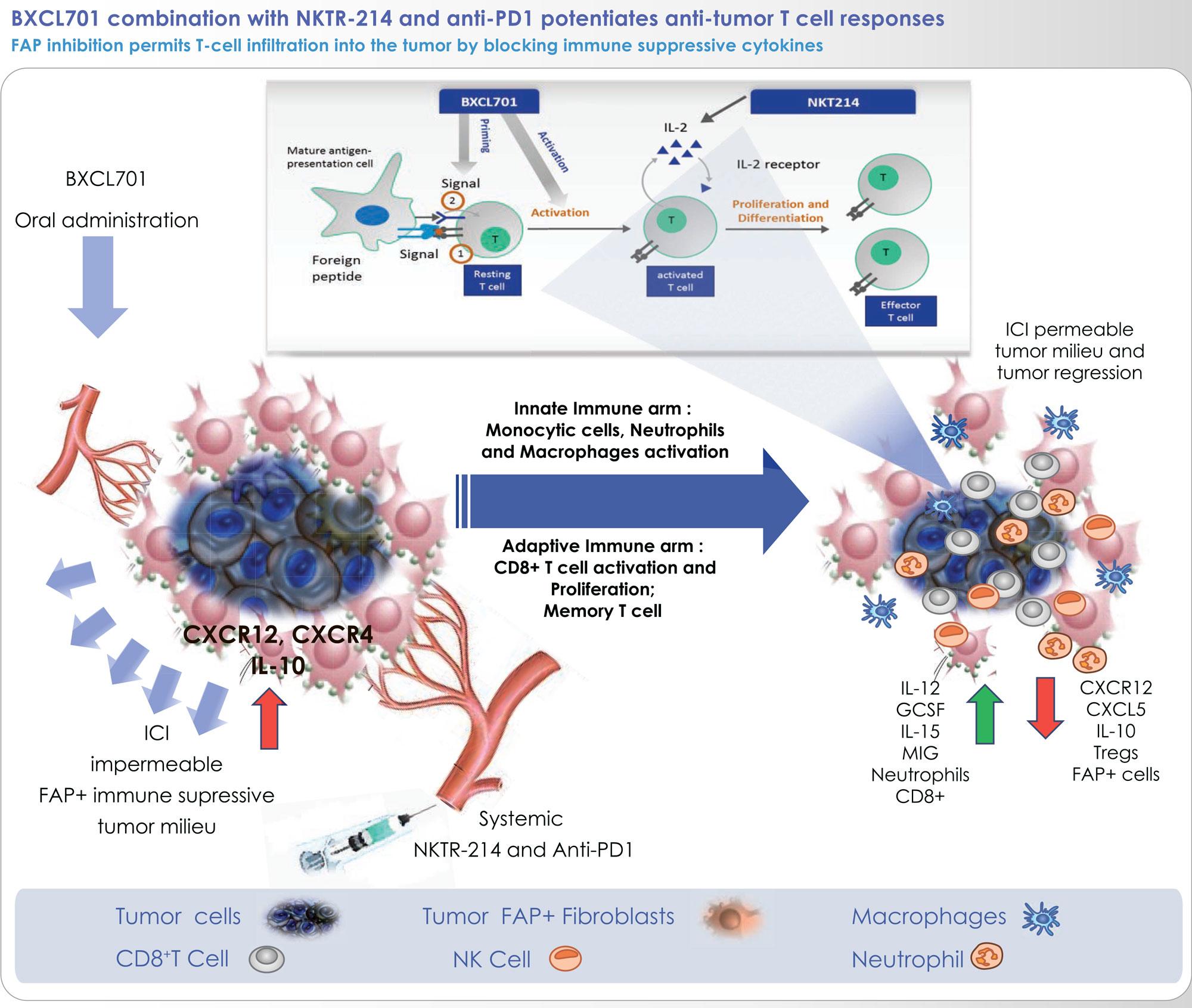 talabostat moa 02 - Иммуноонкологическая чудо-тройка против рака поджелудочной железы