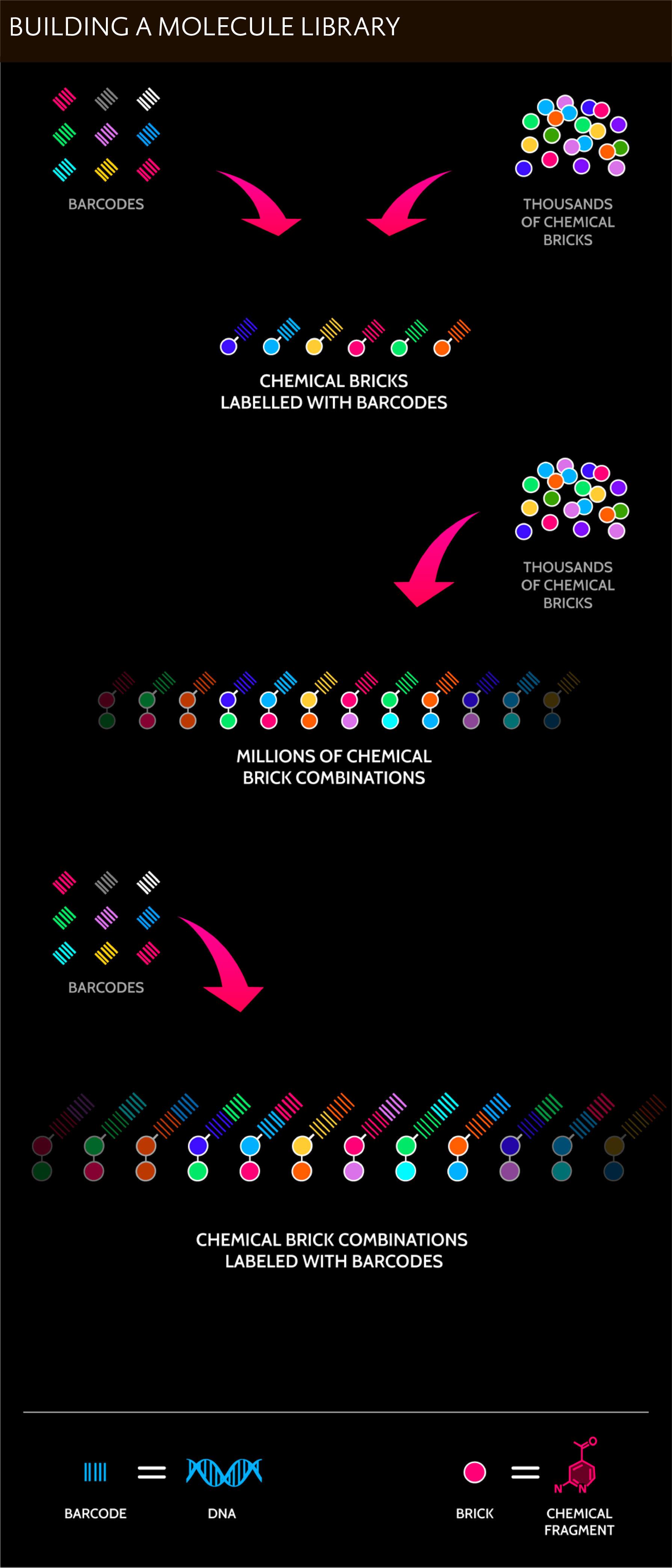 nuevolution 04 - Amgen набросилась на крутую платформу разработки лекарств
