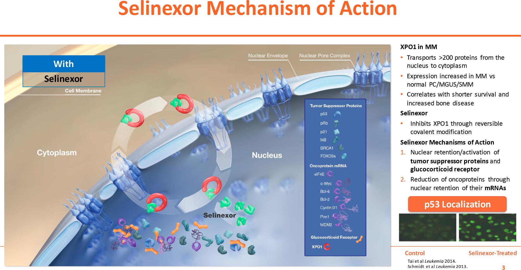 selinexor moa 01 - «Эксповио»: лечение совсем безнадежной множественной миеломы