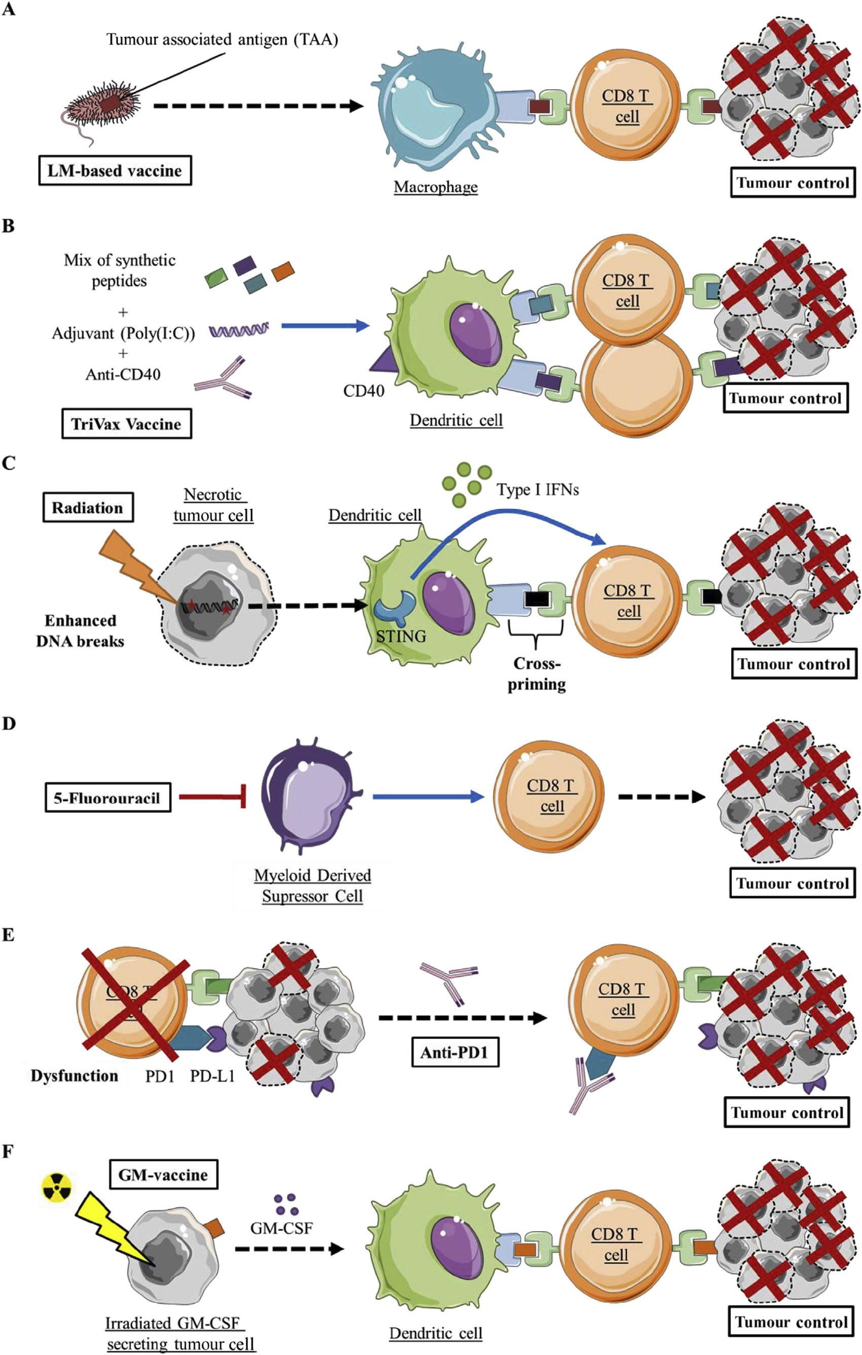 sting moa 02 - STING: иммунологическое жало против раковых заболеваний