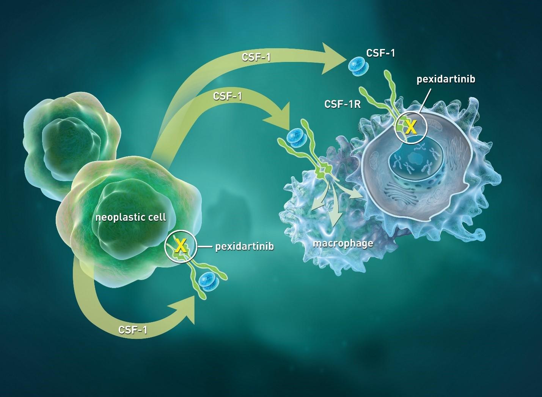pexidartinib moa - «Туралио»: первое лекарство против гигантоклеточной синовиомы
