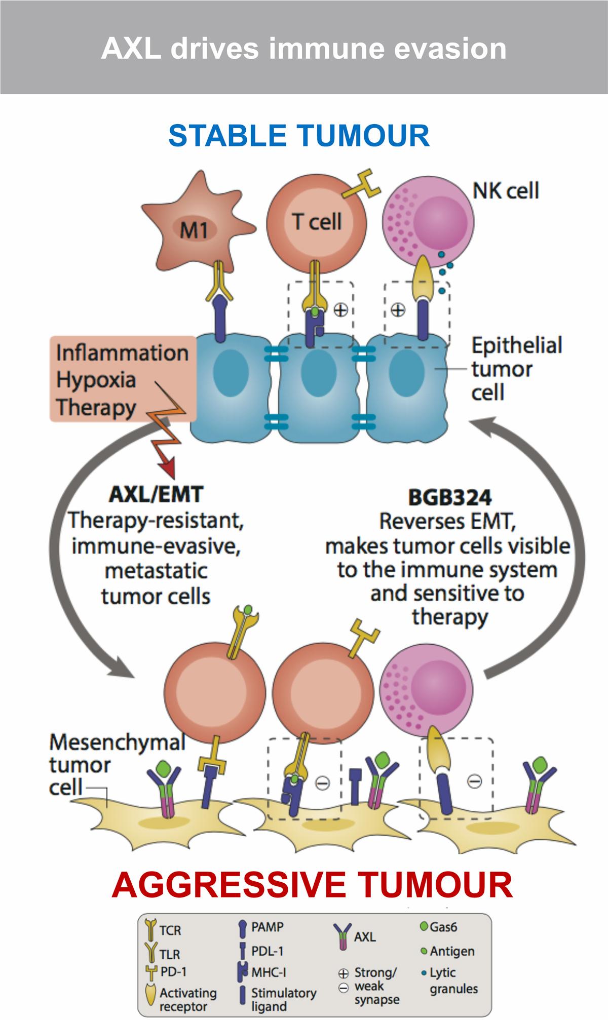 bemcentinib moa - Бемцентиниб: свежее открытие таргетной онкотерапии