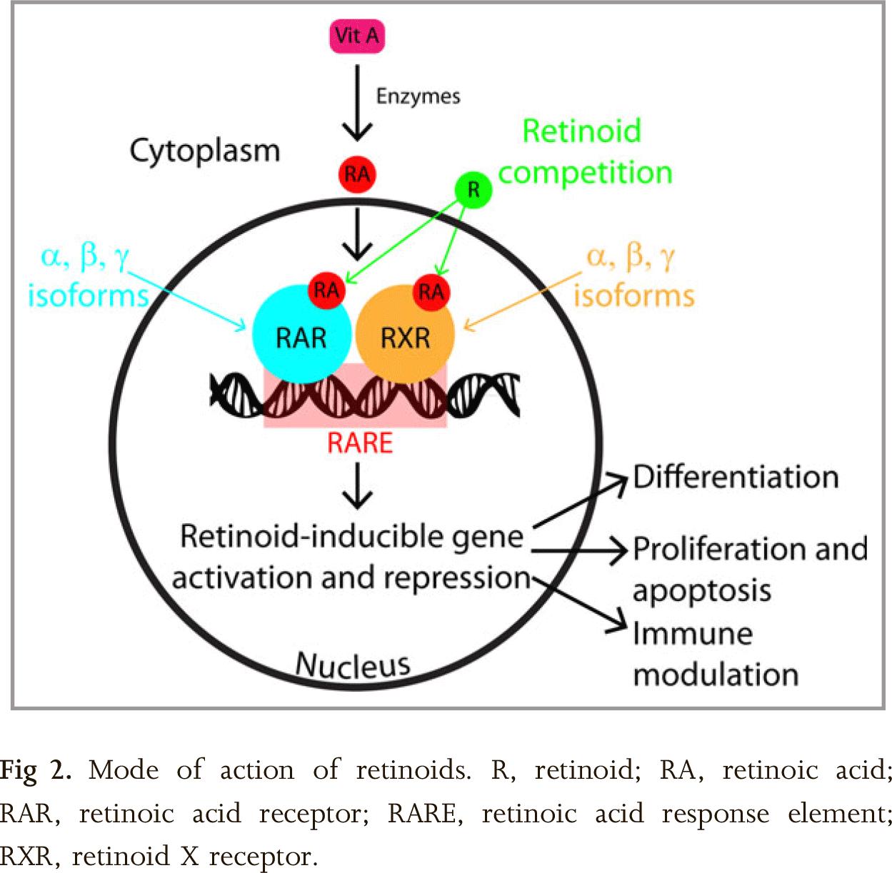 retinoids-moa