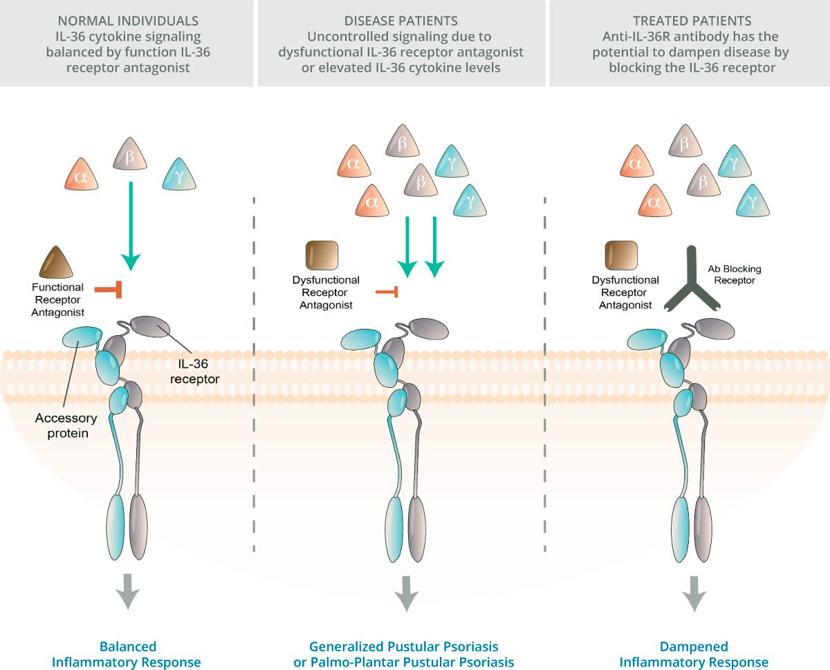 anb019 - Блокада интерлейкина 33 не сработала против атопического дерматита