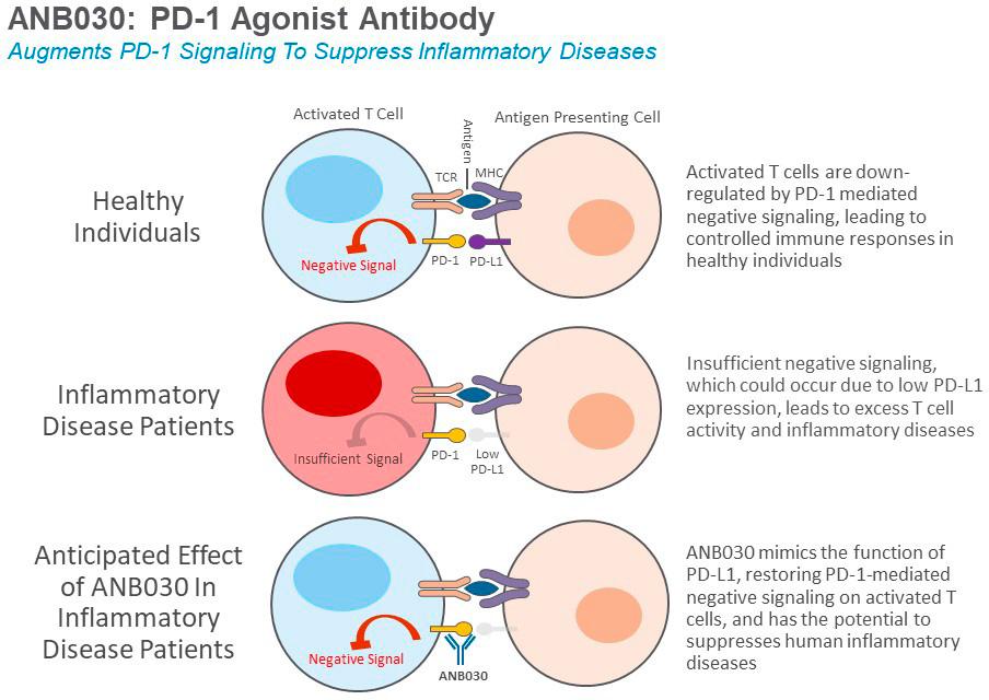 anb030 - Блокада интерлейкина 33 не сработала против атопического дерматита