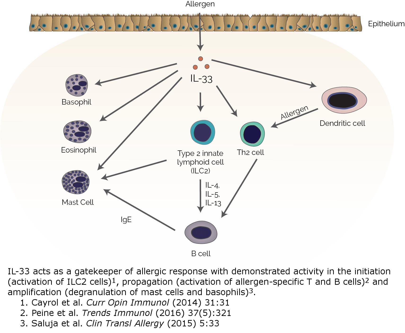 il 33 moa - Блокада интерлейкина 33 не сработала против атопического дерматита