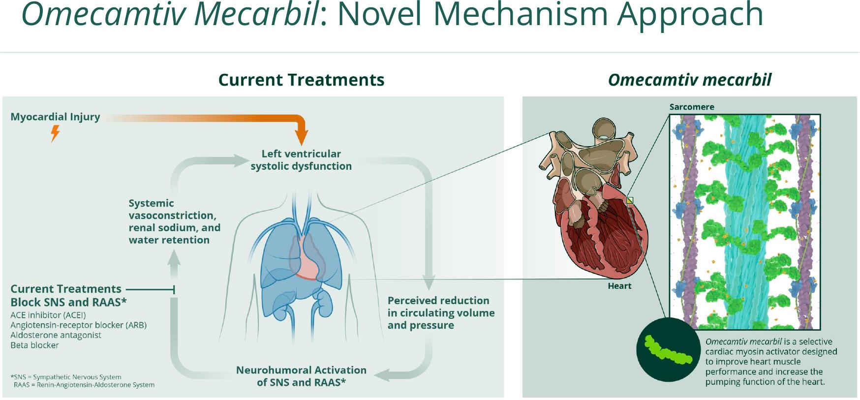 Омекамтив мекарбил: новое лекарство против сердечной недостаточности
