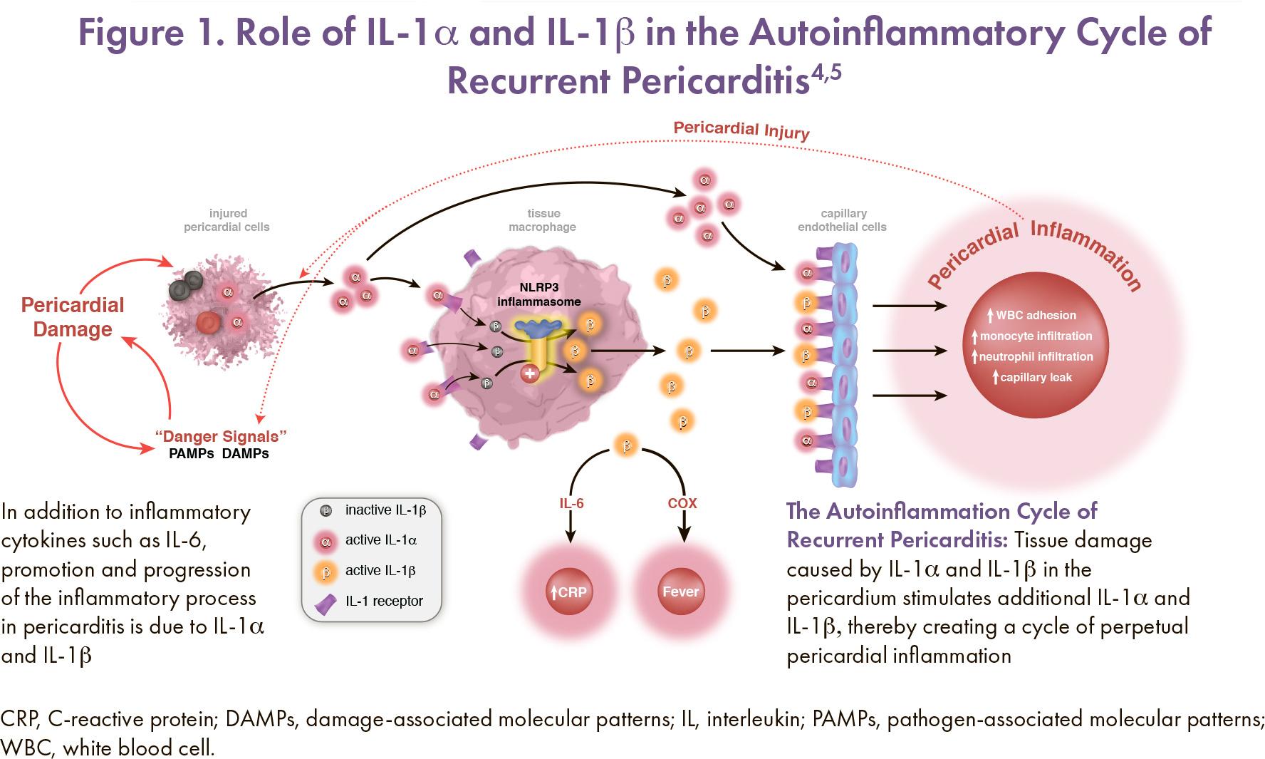 rilonacept moa 01 - Рилонацепт: первое лекарство против хронического перикардита