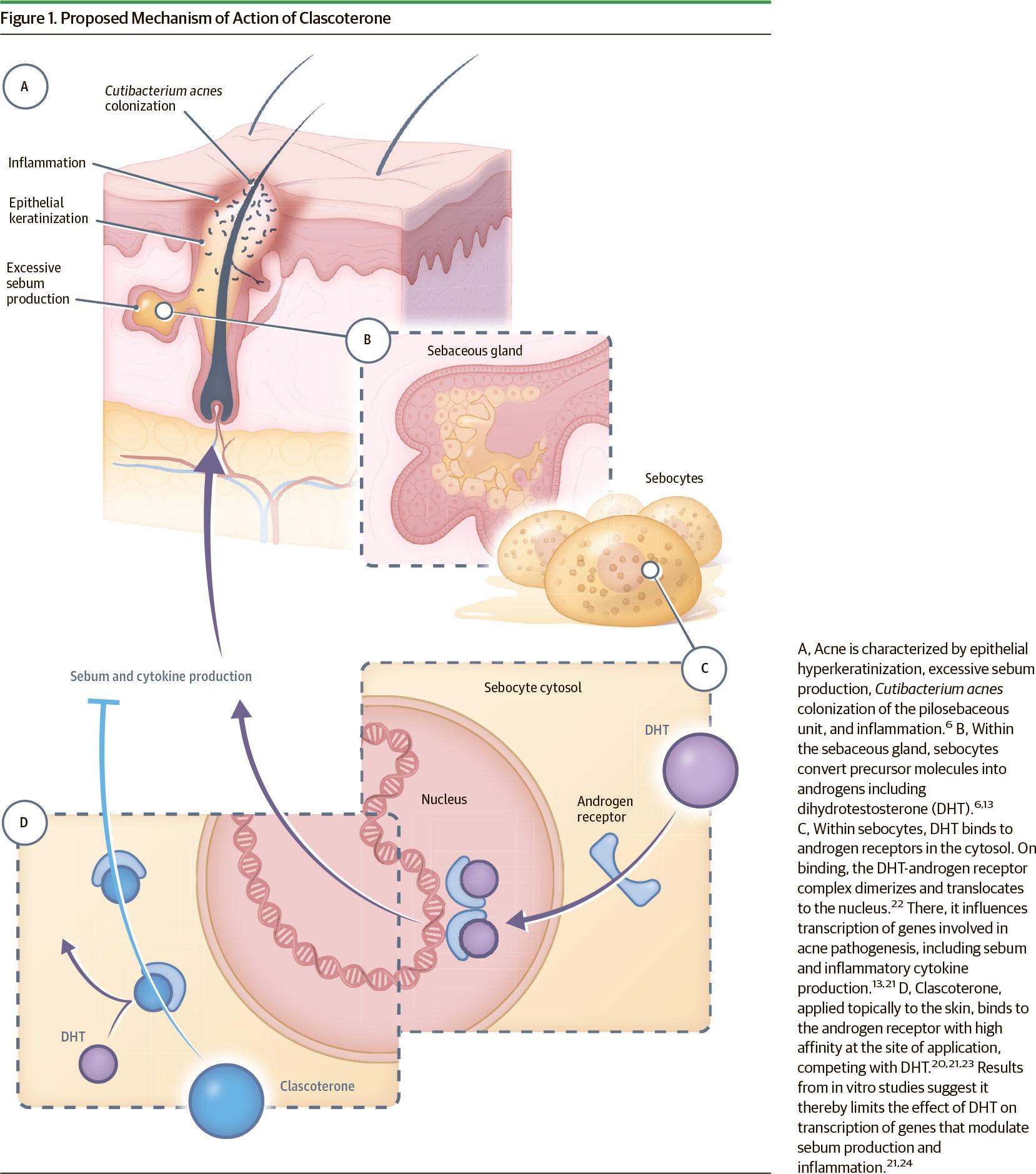 clascoterone moa - «Винлеви»: новое лекарство против акне