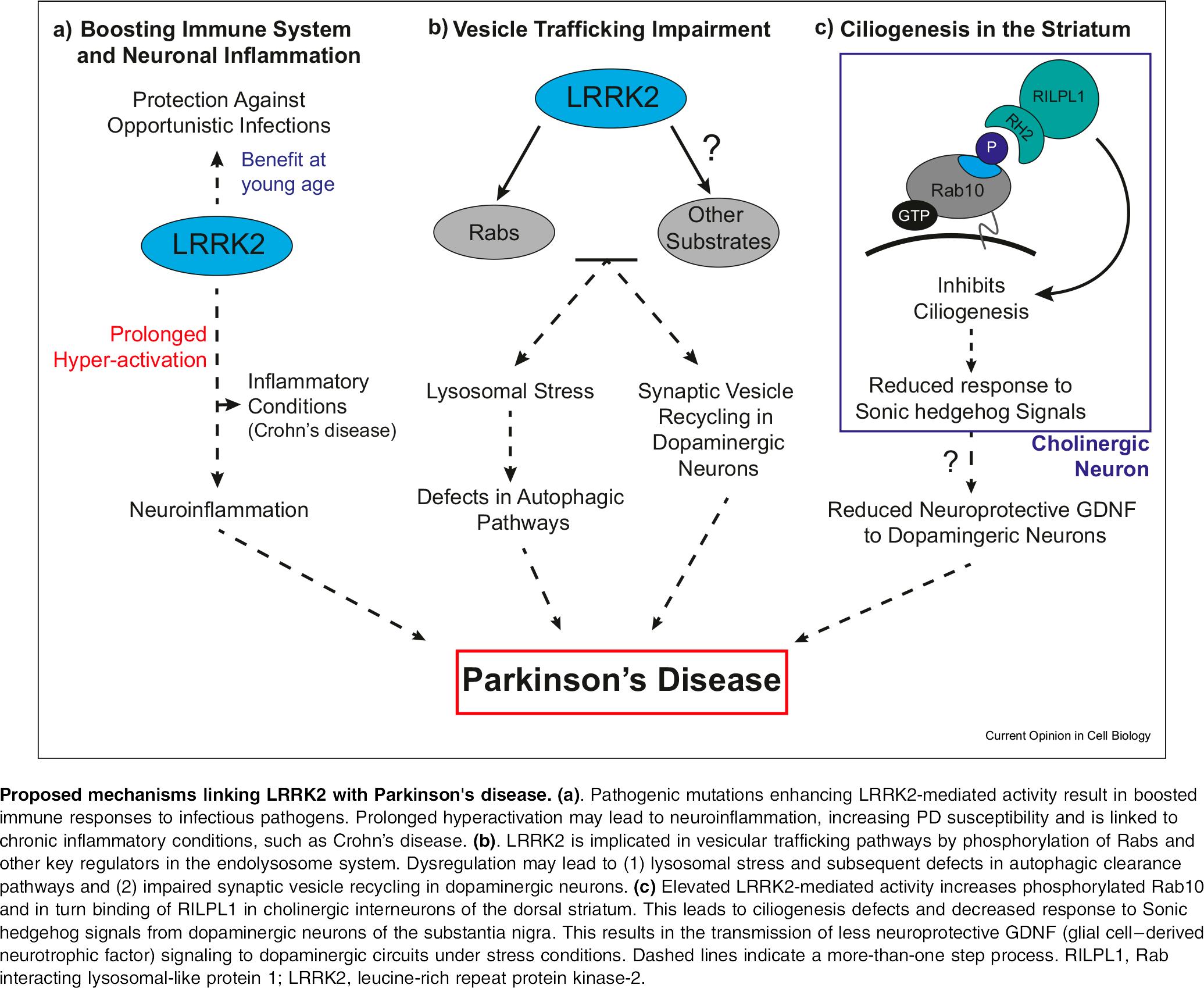 lrrk2 moa - Denali и Biogen: уникальный подход к лечению болезни Паркинсона