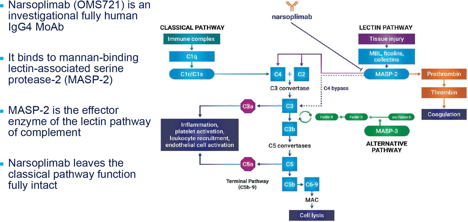 narsoplimab moa - Коронавирус. Лекарства. Нарсоплимаб: в помощь самым тяжелым пациентам с COVID-19