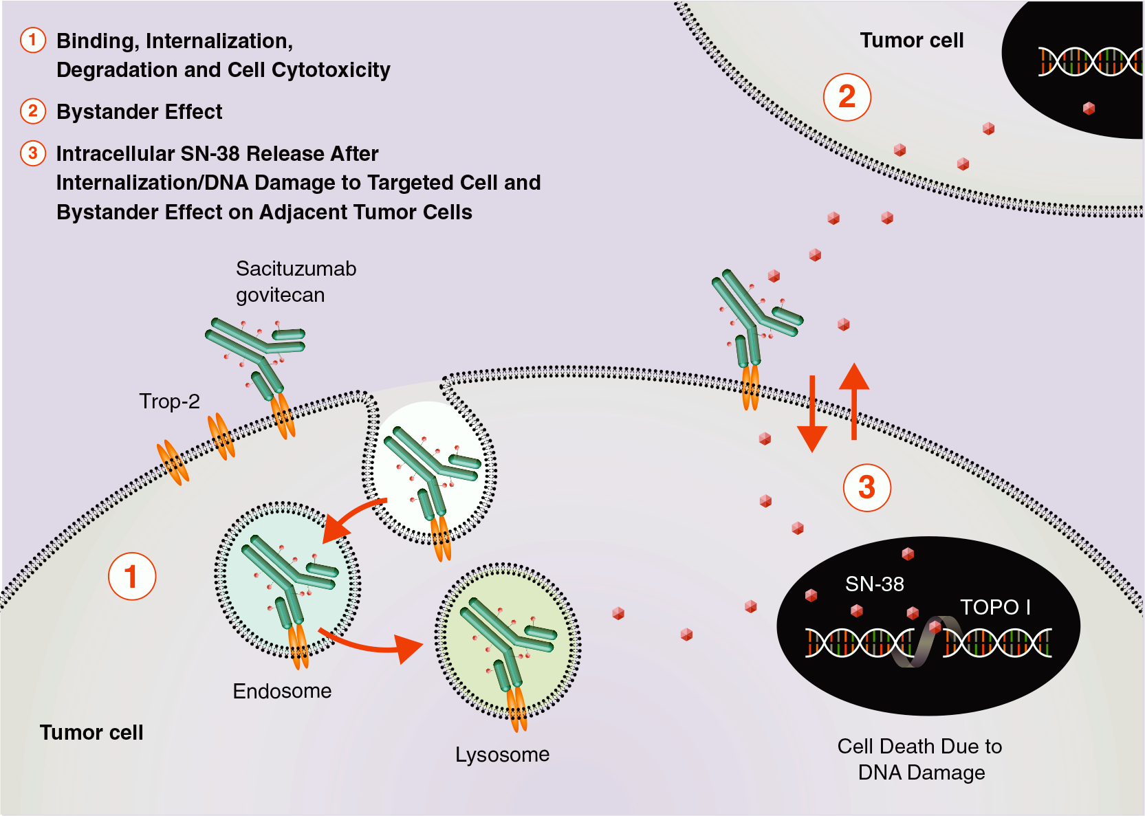 sacituzumab govitecan moa - «Троделви»: новое лекарство против трижды негативного рака молочной железы
