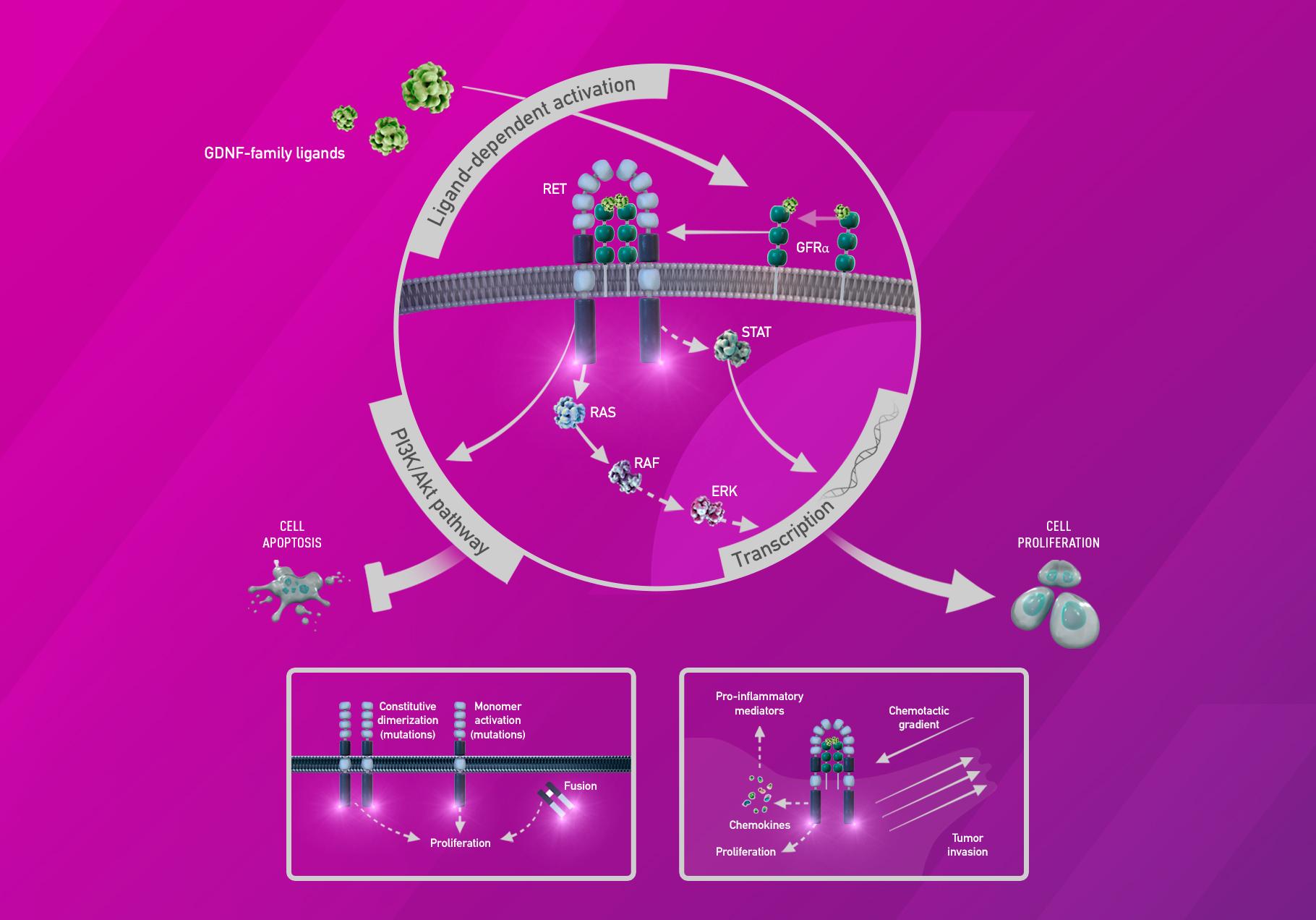 selpercatinib moa - «Ретевмо»: первое лекарство против RET-положительных опухолей