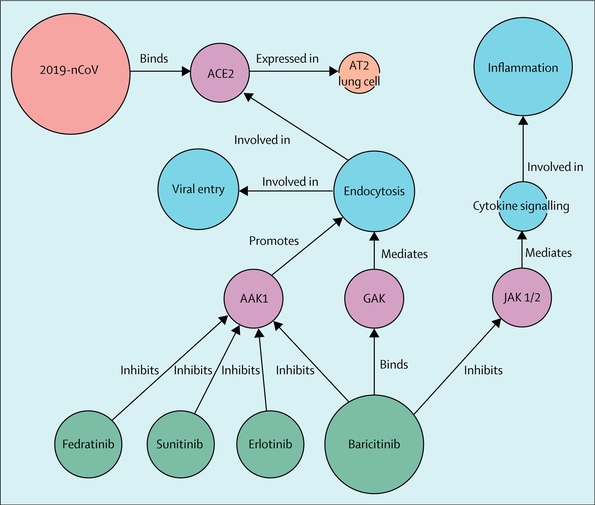 baricitinib covid 19 moa1 - Коронавирус. Лекарства. Ремдесивир плюс барицитиниб — работающая комбинация против COVID-19