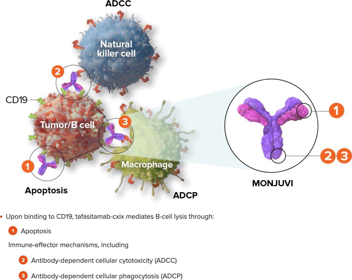 tafasitamab moa - «Монджуви»: мощное лекарство против диффузной B-крупноклеточной лимфомы
