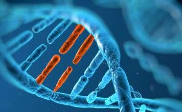 Схематический вид ДНК.